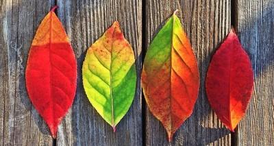 Comunicación interna y gestión del cambio
